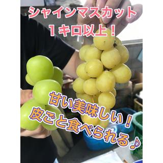 シャインマスカット 1キロ 売り尽くしセール! 長野県産 送料無料 減農薬 甘い(フルーツ)