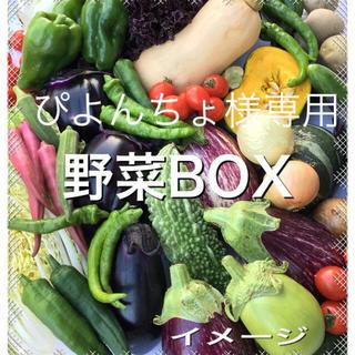 野菜BOX Mサイズ ぴよんちょ様専用(野菜)