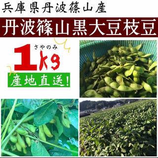 丹波篠山産黒枝豆(野菜)