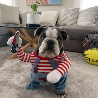 ハロウィン★犬用★コスプレ★洋服★Mサイズ(犬)
