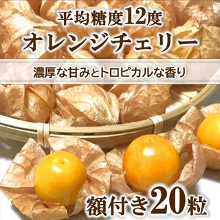 【期間限定】オレンジチェリー(フルーツほおずき)  20粒 無農薬 青森県産(野菜)