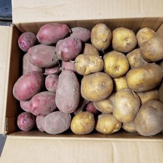 おばば様専用 インカのめざめ レッドムーン 60サイズ(野菜)