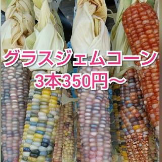 【グラスジェムコーン】3本set~(野菜)