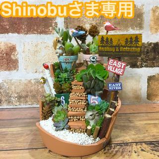 Shinobuさま専用 多肉植物の寄せ植え 森のアパートメント(その他)