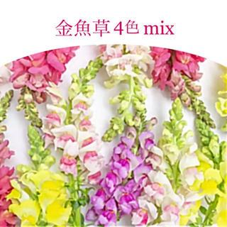 無消毒エディブルフラワー用種子◆金魚草4色mix◆キンギョソウ 種子20粒(その他)