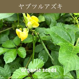 ◆ヤブツルアズキ◆原種小豆◆グリーンカーテンにも!【オーガニック種子 30粒】(その他)