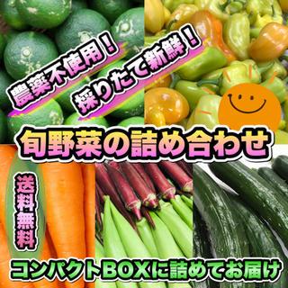 採りたて新鮮✧*。旬野菜のコンパクトセット 〜畑からの直送便〜 無農薬(野菜)
