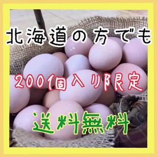コーチン200(野菜)