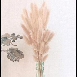 トゥデイフル(TODAYFUL)のラグラスのナチュラルドライフラワー✳花材✳インテリアに(ドライフラワー)