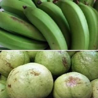 R『『グァバ(白)&三尺バナナ』傷あり 国産バナナ グァバサラダ利用可能品種(フルーツ)