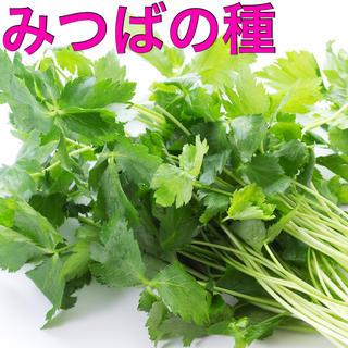 みつば 種 約50粒(野菜)