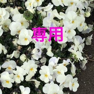 グッチ(Gucci)のGucci リボン 切り売り 3m 薄いピンク(各種パーツ)