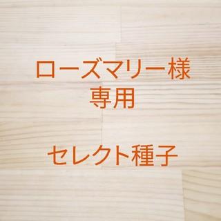 ローズマリー様専用 セレクト種子 6袋(野菜)