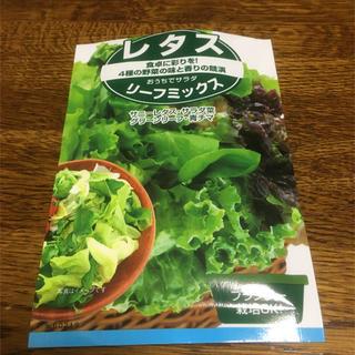種 レタス 4種 リーフミックス(その他)