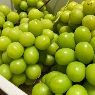 朝摘◆送料無料◆岡山県産◆晴王◆シャインマスカット(フルーツ)