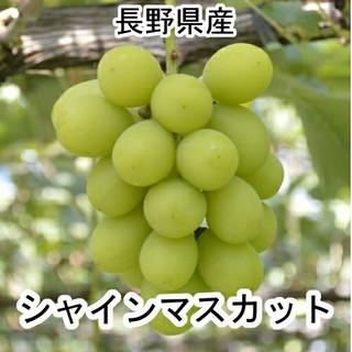 シャキシャキ! シャインマスカット 16パックセット 400g×16個 長野県産(フルーツ)