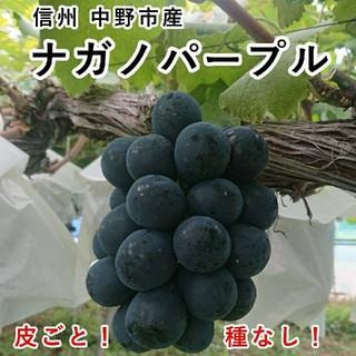 長野県 中野市産 大粒 ナガノパープル 2パックセット (350g入×2個)(フルーツ)