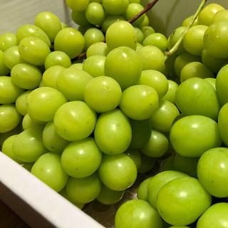 朝摘◆送料無料◆岡山県産◆晴王◆シャインマスカット(野菜)