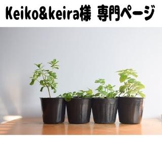 Keiko&keira様 専門ページです!(プランター)