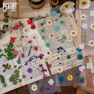 海外 ドライフラワー研究所シリーズ 植物 花 コラージュ  素材バック 8種(ドライフラワー)