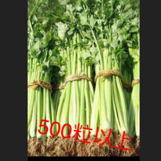 セロリの種500粒以上(野菜)