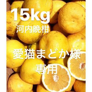 愛猫まどか様 専用 宇和ゴールド15Kg   河内晩柑 愛媛(フルーツ)
