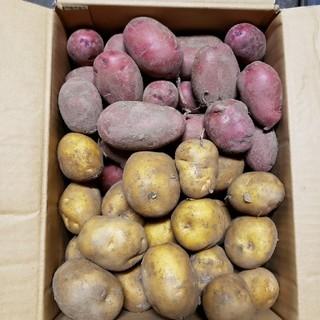 naka様専用 インカのめざめ レッドムーン 100サイズ(野菜)
