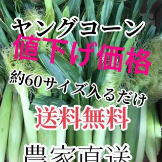 値下げセール農家直送採れたてヤングコーン約60サイズ入るだけ(野菜)