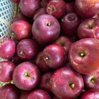 減農薬栽培山形産 映えでしかナイ!紅玉りんご 5キロ訳あり加工用バラ詰め(フルーツ)