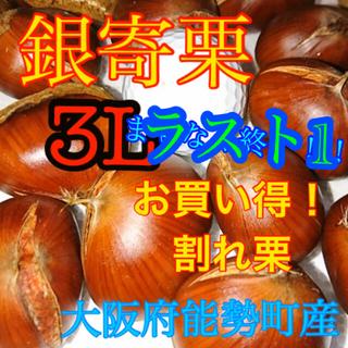 栗 銀寄栗 割れ3L (野菜)
