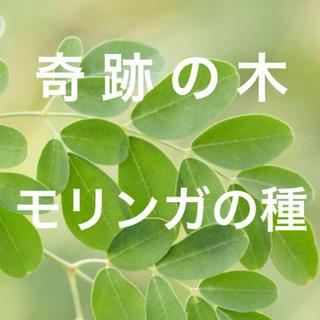 【スーパーフードの種子】奇跡の木 モリンガの種20粒 ハーブ タネ 美容健康(野菜)
