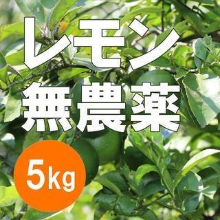 レモン 5kg 無農薬 採りたて出荷 静岡県産(フルーツ)