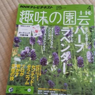 NHK 趣味の園芸 2015年 04月号(専門誌)