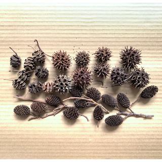 「メタセコイア ヤシャブシ フウの実 木の実3種類セット(ロ)」〈処理済〉素材(ドライフラワー)