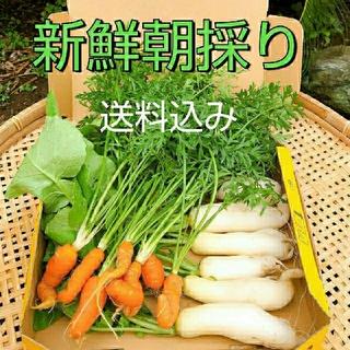 新鮮朝採り【訳有り】野菜セット♪農薬不使用(野菜)