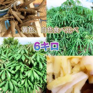 キャッサバ 2種 合計 6キロ(野菜)