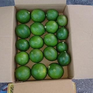 無農薬 グリーンレモン 2㎏(フルーツ)