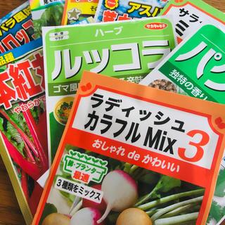 野菜の種子(プランター編)(野菜)