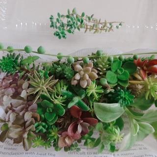 多肉植物 カット苗30種セット(その他)
