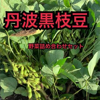 丹波黒枝豆 野菜セット 12日収穫 セール価格(野菜)