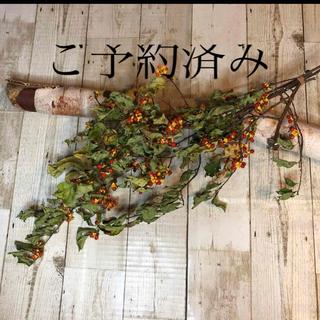 ドライフラワー ツルウメモドキ 北海道(ドライフラワー)