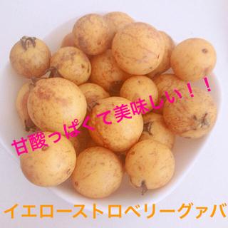 MIYOSHI-FARM様イエローグァバ 種30粒 UFOズッキーニ種5粒(フルーツ)