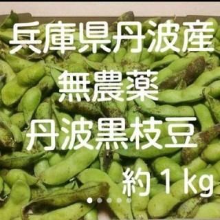 【産地直送!】正真正銘 兵庫県丹波産 無農薬 丹波の黒枝豆(野菜)