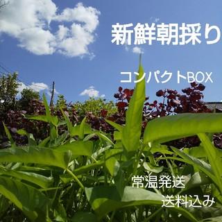 新鮮朝採り【コンパクトセット】農薬不使用野菜(野菜)