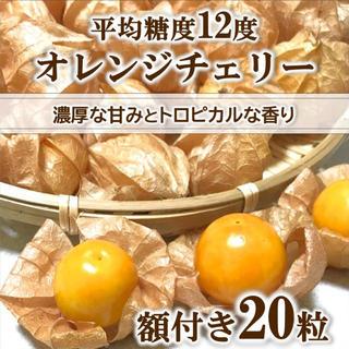【きたにゃん様】オレンジチェリー(フルーツほおずき)  20粒 無農薬 青森県産(野菜)