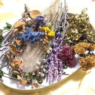 [お値下げ]花材お得パック 13種類 花材 素材 ナチュラル C(ドライフラワー)