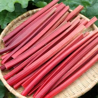 赤いルバーブ 1kg  ヤマト宅急便(常温)八ヶ岳山麓(野菜)