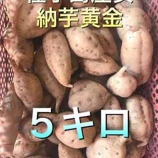 種子島産安納芋黄金新物5キロ(野菜)