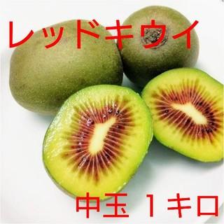キウイフルーツ【レッドキウイ】1キロ・中玉(フルーツ)