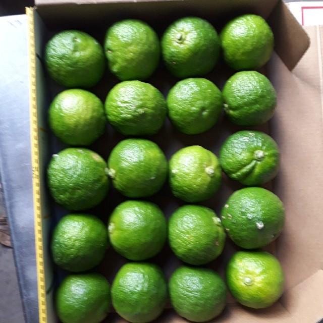 国産 無農薬 青柚子 ゆず 1.0kg 送料無料 食品/飲料/酒の食品(フルーツ)の商品写真